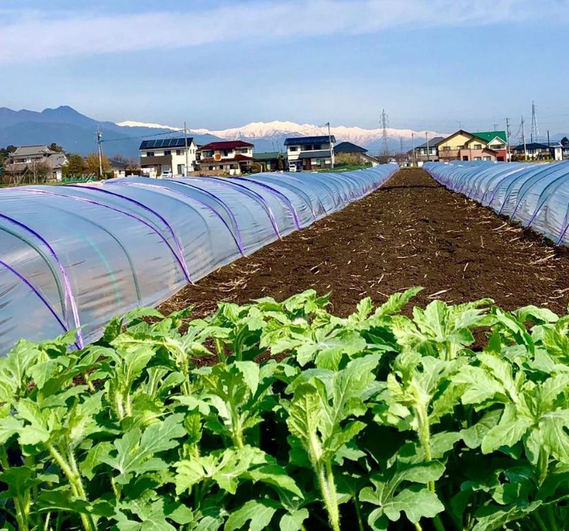 松本市 波田にある、そーゆー農園の畑