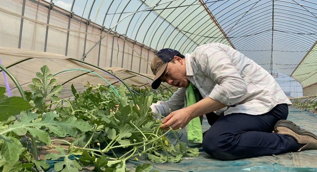 松本市 波田 スイカ そーゆー農園