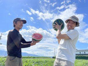 松本市波田のすいか収穫スタート